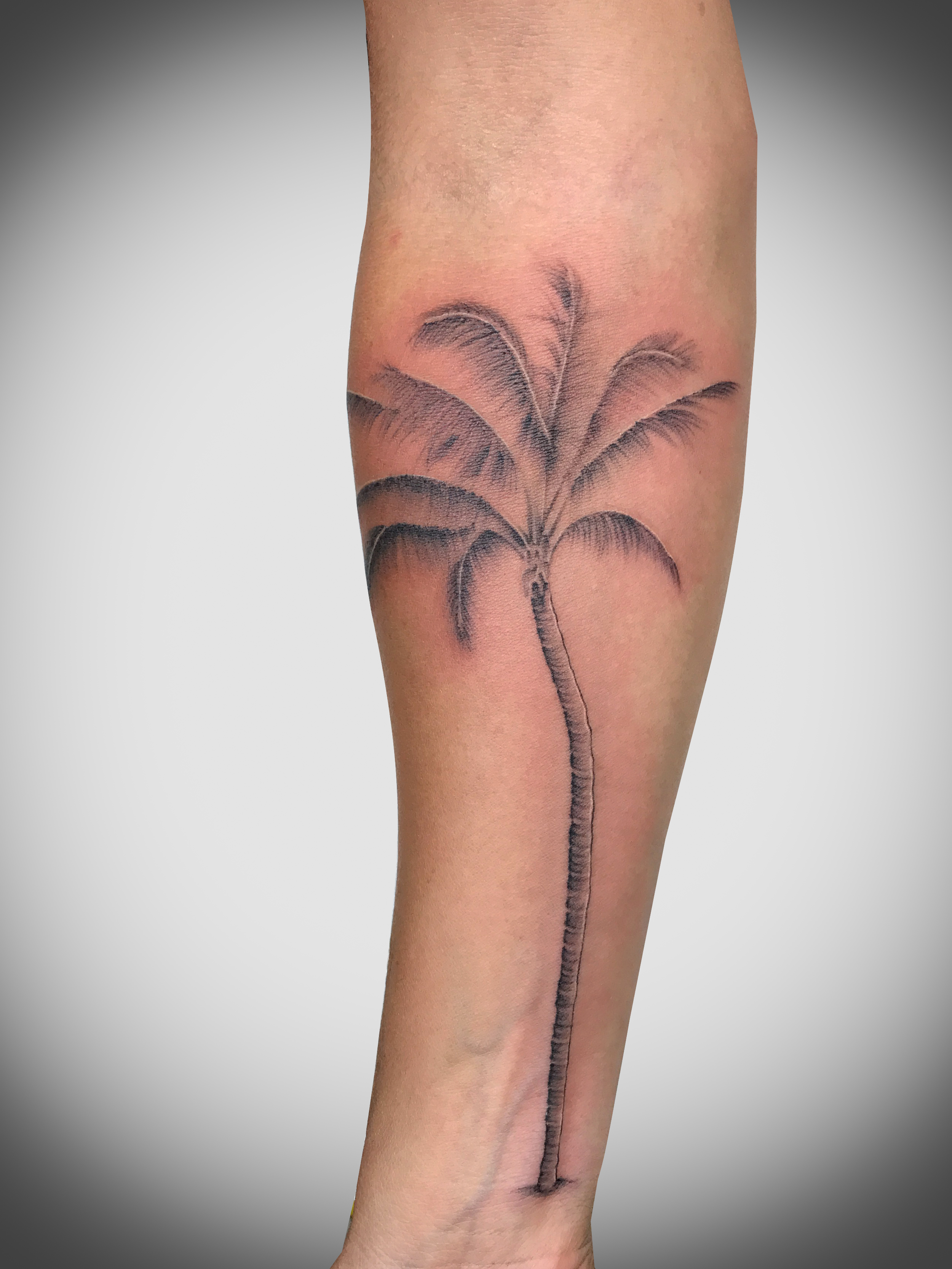 Q Tattoo in Huntington Beach - Sara Delara - palm tree